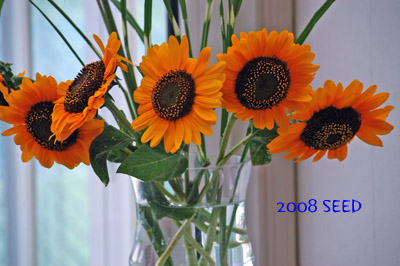 DSC_0002-400.jpg
