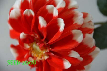DSC_0003-450.jpg