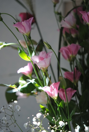 DSC_0018-450.jpg