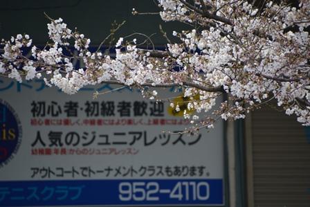 DSC_9764-450.jpg